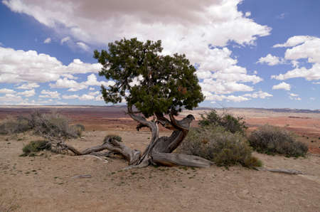 Tree survives in New Mexico Desert Stock fotó - 137527649