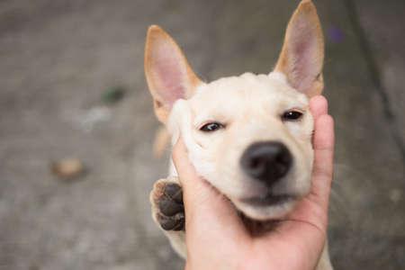 cutie: Cutie little Thai dog in a hand