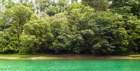 tropical evergreen forest: Traveling beside a little forest, green lagoon and living with a fresh air