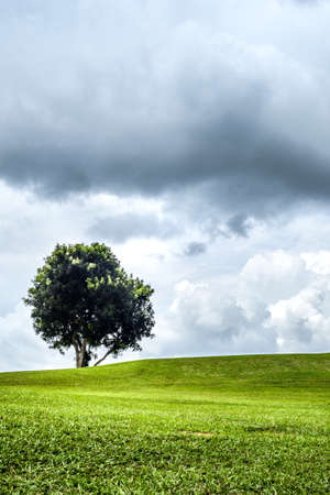 distressing: The lonely tree in lonely green field with the mostly cloudy