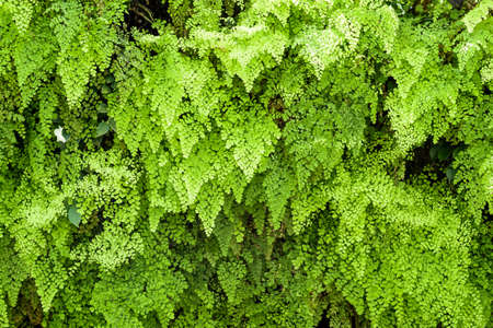 green plants: Green natural background by foliage plants Stock Photo