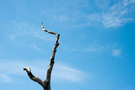 Dried branch in the blue sky