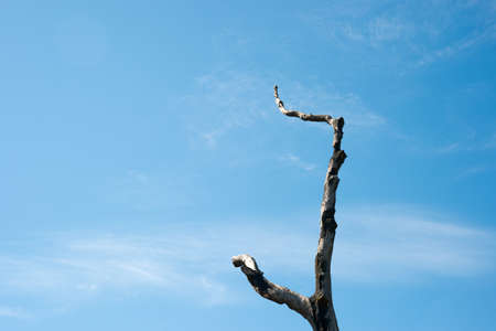crook: Dried branch in the blue sky