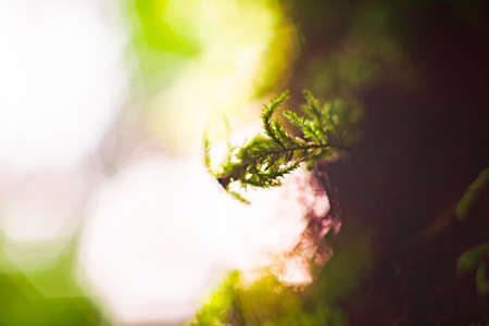 specific: Natural light shining to fern branches during sunrise after morning with big bokeh in background Stock Photo