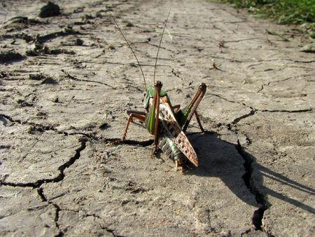 strangeness: Grasshopper, going on a long journey, sitting on the cracked ground.