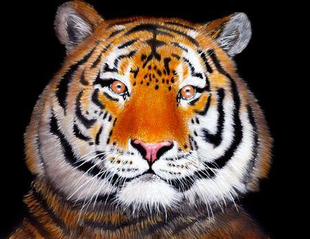 airbrushing: Tigre dibujadas con pintura acr�lica sobre la hoja de papel  Foto de archivo