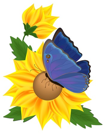 sunflower drawing: Sunflower and blue butterfly