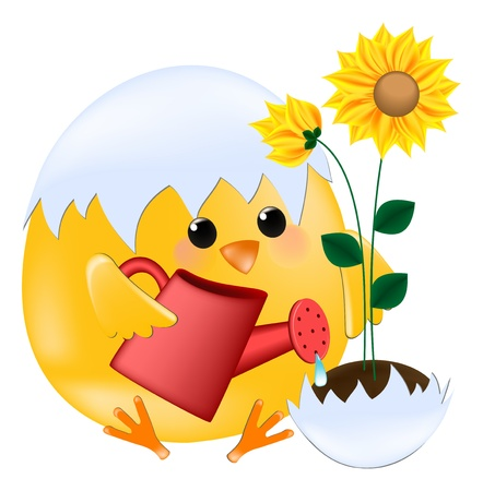 chick watering sunflower Vector