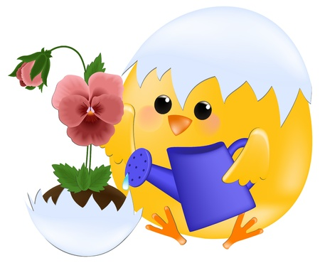 Greetings card with chick watering pansies Stock Vector - 9117179