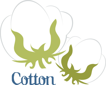boll: Cotton is a soft fluffy staple fiber that grows in a boll or protective capsule around the seeds of cotton plants of the genus Gossypium Illustration