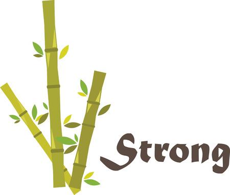 竹は非常に特殊です。バイオマス発電の率は植物界で群を抜いて高速成長している天然資源です。