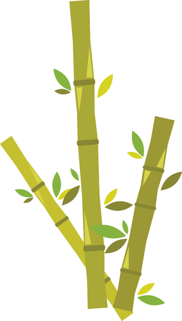 lucky bamboo: Bamboo is very special. It is a fast growing natural resource whose rate of biomass generation is unsurpassed in the plant kingdom. Illustration