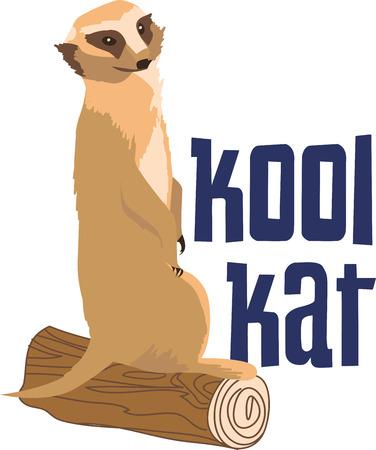 meer: Cuddle up this cute Meerkat to keep them warm.