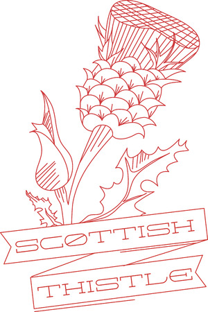 prickles: Thistle is the name for a group of lovely flowers Illustration