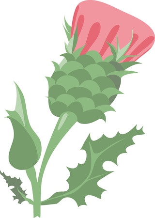prickles: Colorful Thistle will fill colors in our life Illustration