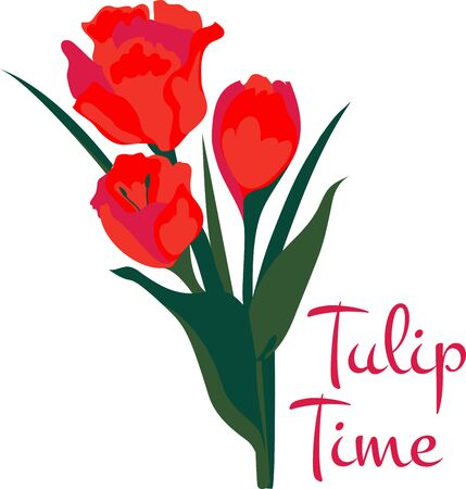 Spring Tulips are famous in Dutch land