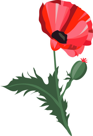Poppy Stem has lots of good medicinal effects