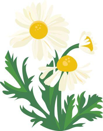 petal: The daisy