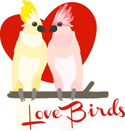 cockatoos: una coppia di romantici cacatua selvatici che mostrano il loro affetto per l'altro mooooolto carino Vettoriali