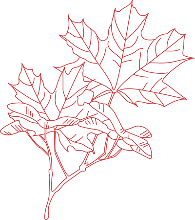 adorn: Lovely redwork maple leaves are a wonderful way to adorn your favorite projects. Illustration
