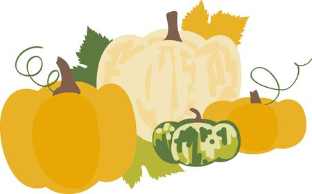 harvest time: Harvest time  pumpkins for all your thanksgiving celebrations.