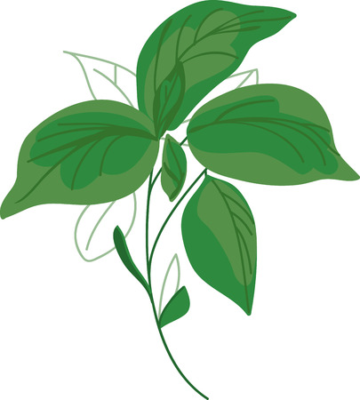 basil leaf: Top your pizza with these fresh Basil  sundried tomatoes and Mozarella and enjoy it