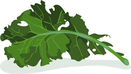 Add this bunch of kale to towels for the kitchen Stock Illustratie