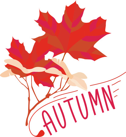 adorn: Lovely, colorful maple leaves are a wonderful way to adorn your favorite projects.  Beautiful fall colors make it perfect for fall holiday adornments. Illustration