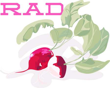 tipped: A tiny radish of passionate scarlet, tipped modestly in white.
