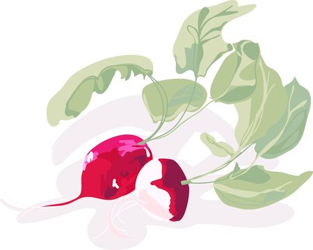 A tiny radish of passionate scarlet, tipped modestly in white.