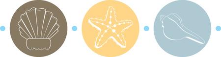 carapace: Seashells make a great beach design.