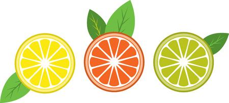 citrus tree:
