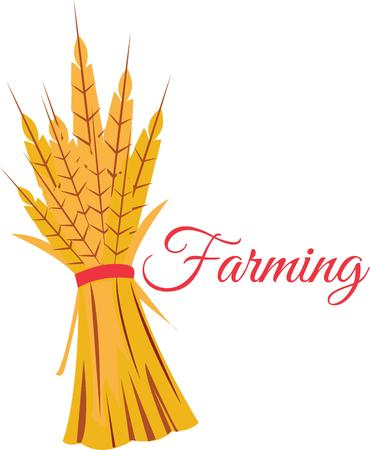 This Autumn wheat design is perfect for your fall decorations. Illustration