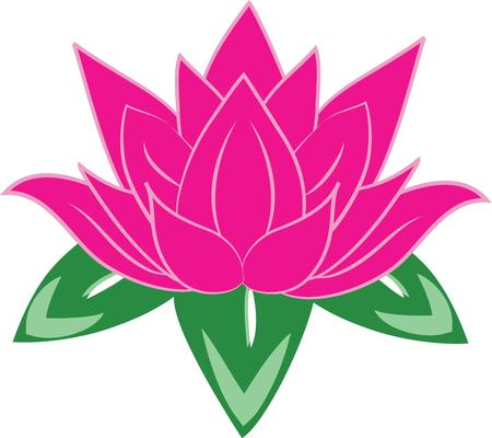 The lotus flower is a beautiful flower in the pond.