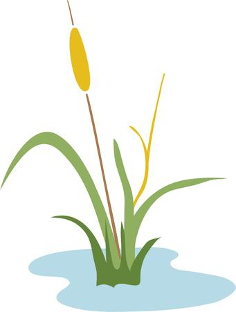 cattail: Add a touch of wetlands to your projects with this cattail design.  A great design for a wall hanging or decal.
