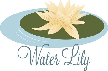 egyptian lily: Enjoy the exotic view of beautiful water lilies floating in your pond.