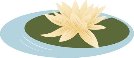 water lilies: Disfrute de la vista ex�tica de hermosas nen�fares flotando en el estanque.