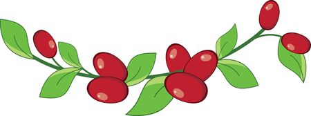 Create a splendid look for summer with tasty cranberries on place mats and linens!