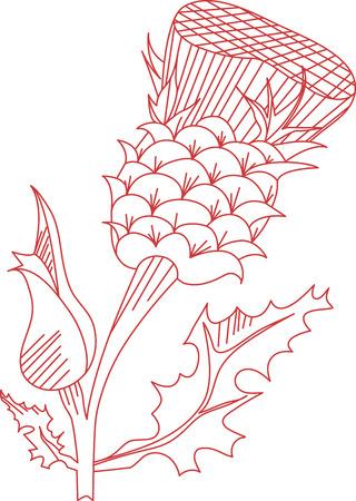 prickles: Cardo � il nome di un gruppo di splendidi fiori. Questa immagine Redwork � perfetto per il vostro prossimo progetto. Perfetto su un grembiule