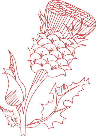 prickle: Thistle is the name for a group of lovely flowers. This redwork image is perfect on your next design.  Perfect on an apron
