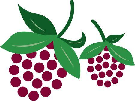 Delicious raspberries