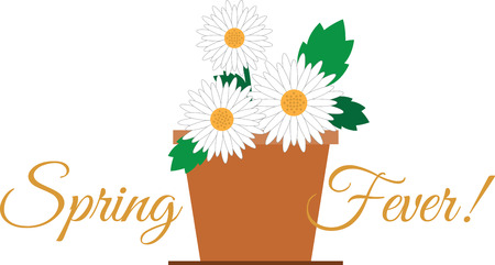 shasta daisy: Beautiful flowers are a wonderful accent to any project. Illustration