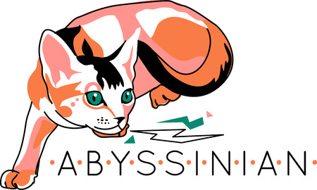 abyssinian: Give the cat lover in your family a funny gift. They will love it!