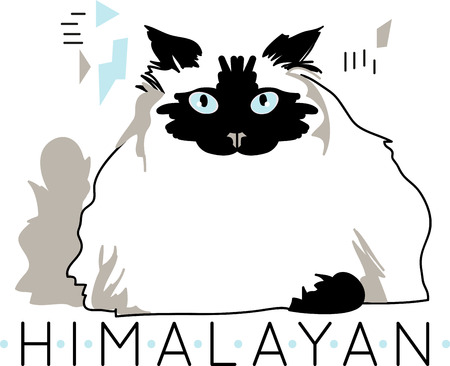 himalayan cat: Illustration of cat  Illustration