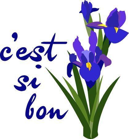 Iris means rainbow. It has many colors.So Enjoy the beautiful Iris Design Illusztráció