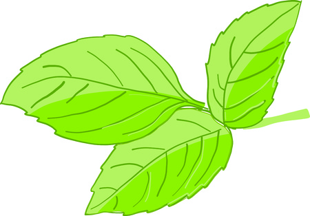 Wake up your taste buds! Spark your food with this basil design on kitchen towels, table linen, napkins and more! 向量圖像