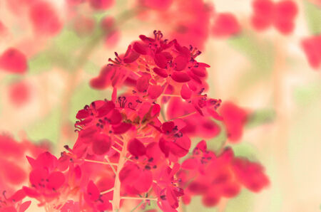 captured: Natural flower background captured from nature