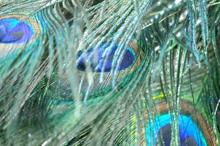 vogelspuren: Abstrakter Hintergrund der picock Feder Lizenzfreie Bilder