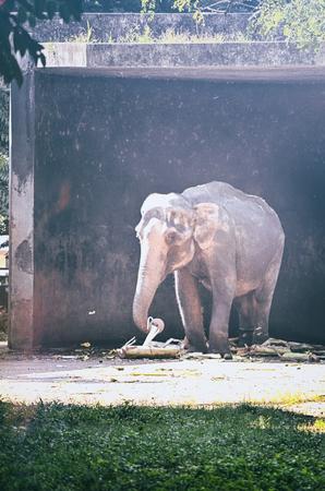 wrinkled brow: Portrait image of Wildlife Elephant