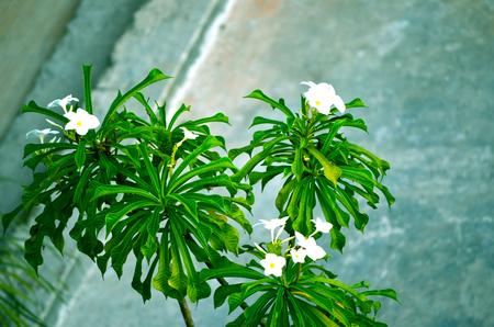 Flower tree photo